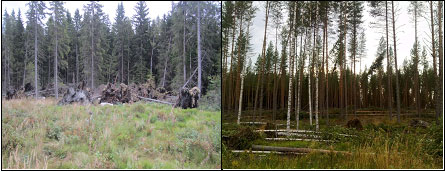 Figure 1. Under warming climate, the risk of wind damages in forests will increase regardless of any change in windiness.