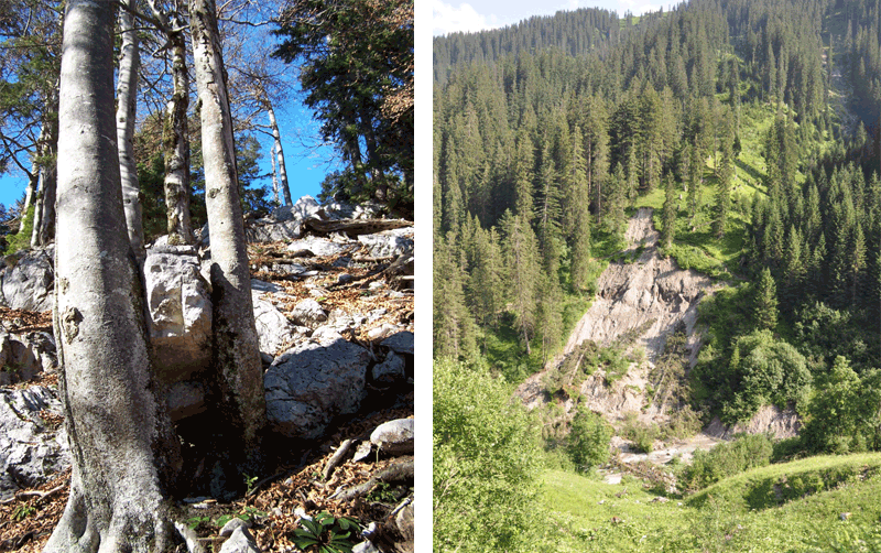 Figure 11: A limestone rock retained by beech trees (left, photo: Rupert Seidl). Landslide erosion of lateral moraines on forested slopes (right, photo: MJL).