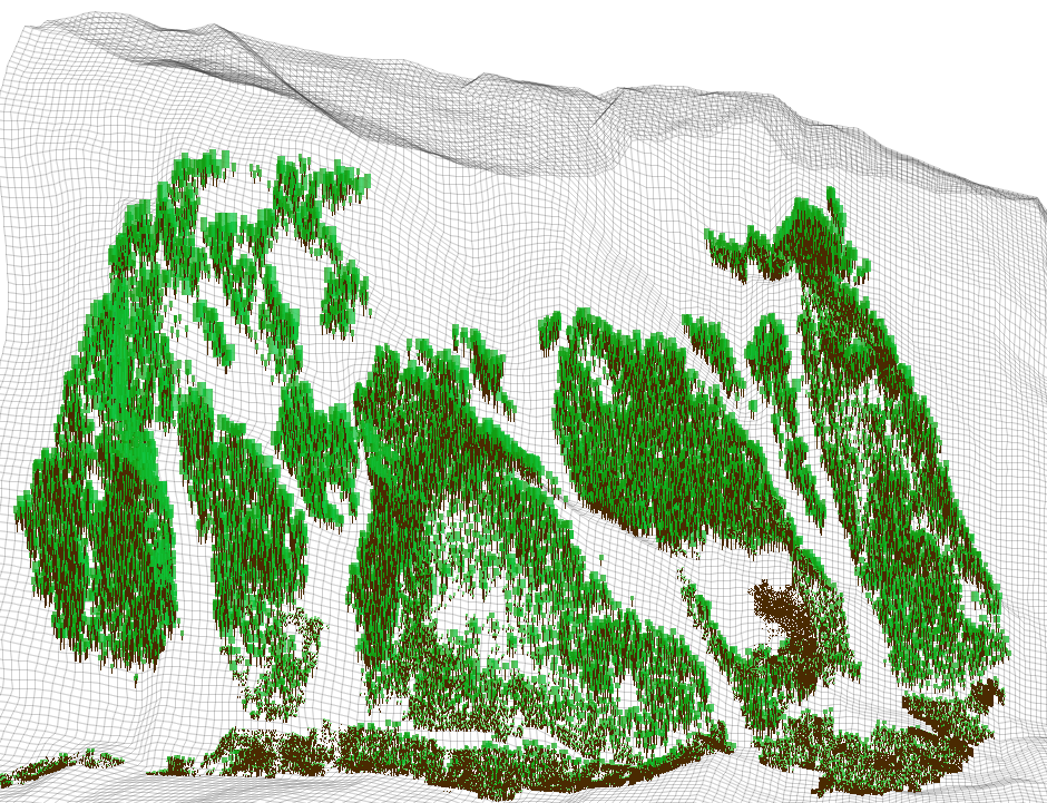 Figure MO-7: A more detailed visualization of ca. 70 ha forests of the south facing slope in the Rellstal valley in the Montafon. Meso-scale forest structure and distribution pattern is highlighted.