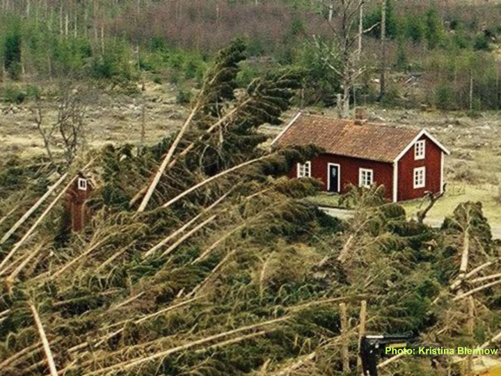 Figure SE-2: Kronoberg County was the most extensively damaged county in a major wind damage event on 8 January, 2005. The fallen trees resulted in extensive secondary effects straining civil security to its limits. Photo Kristina Blennow.